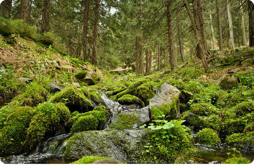 Mosses and trees are all part of the plant kingdom