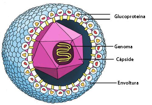 Estructuras De Los Virus Ck 12 Foundation