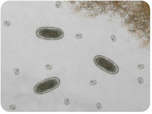 First Cells