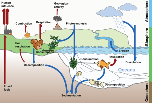 An illustration of the carbon cycle