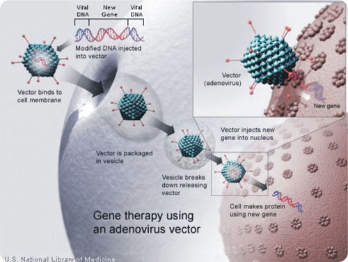 Technique for conducting gene therapy using the Adenovirus vector