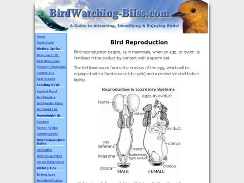 Bird Reproduction and Anatomy