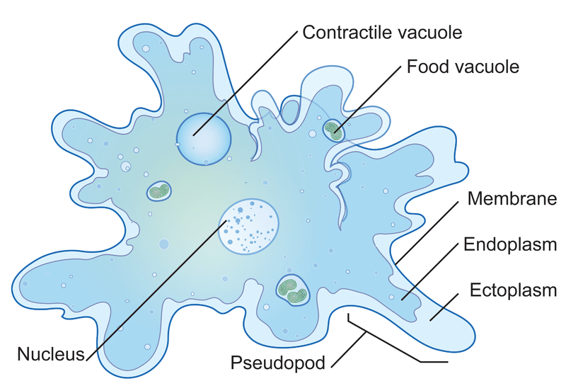 About Microbiology - Protozoa