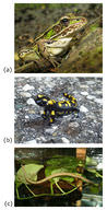 Examples of living amphibians