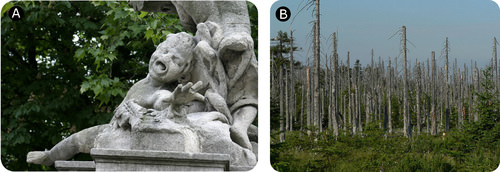 Acid rain degrades marble statues and kills trees
