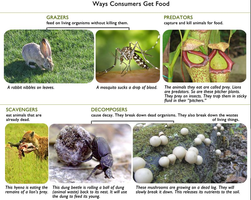 The different ways consumer get food