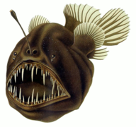 An anglerfish is an organism that falls into the benthos group