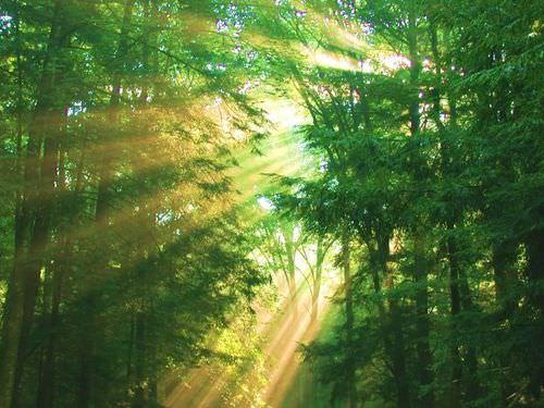 Beam of light shining through dust in trees