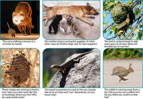 Examples of animal behaviors include hunting, nursing, building a nest, sunning, and running away from predators