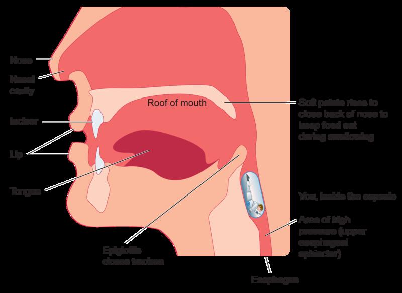 feel-like-food-is-stuck-in-throat