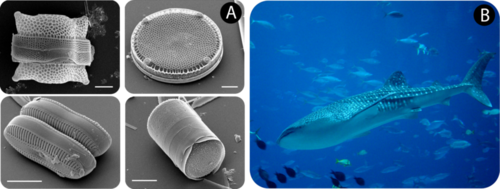 Diatoms and whale sharks are all made of cells