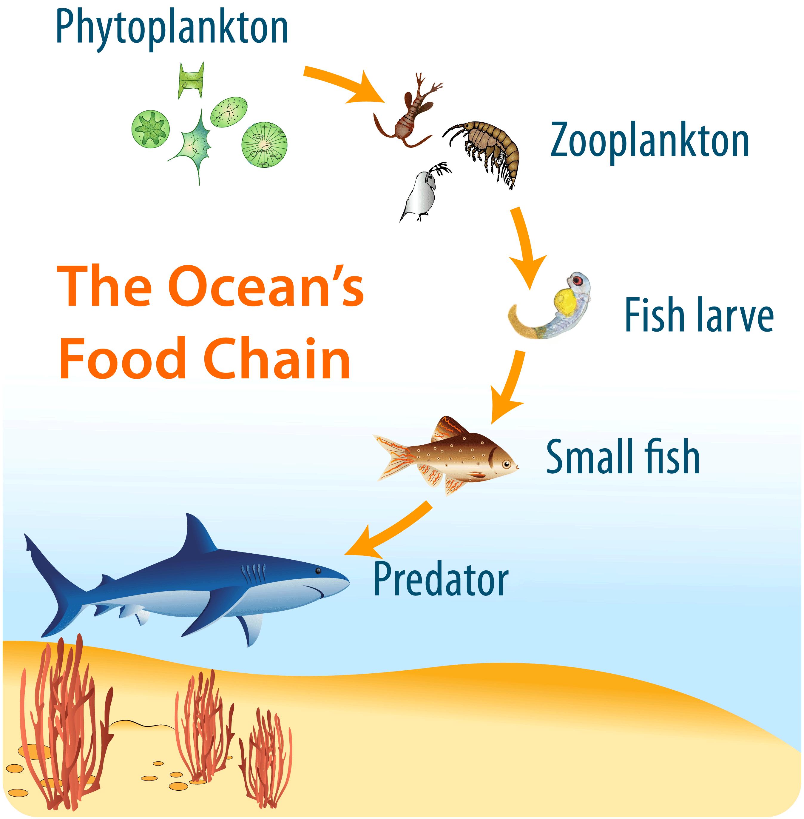Ocean Life | CK-12 Foundation