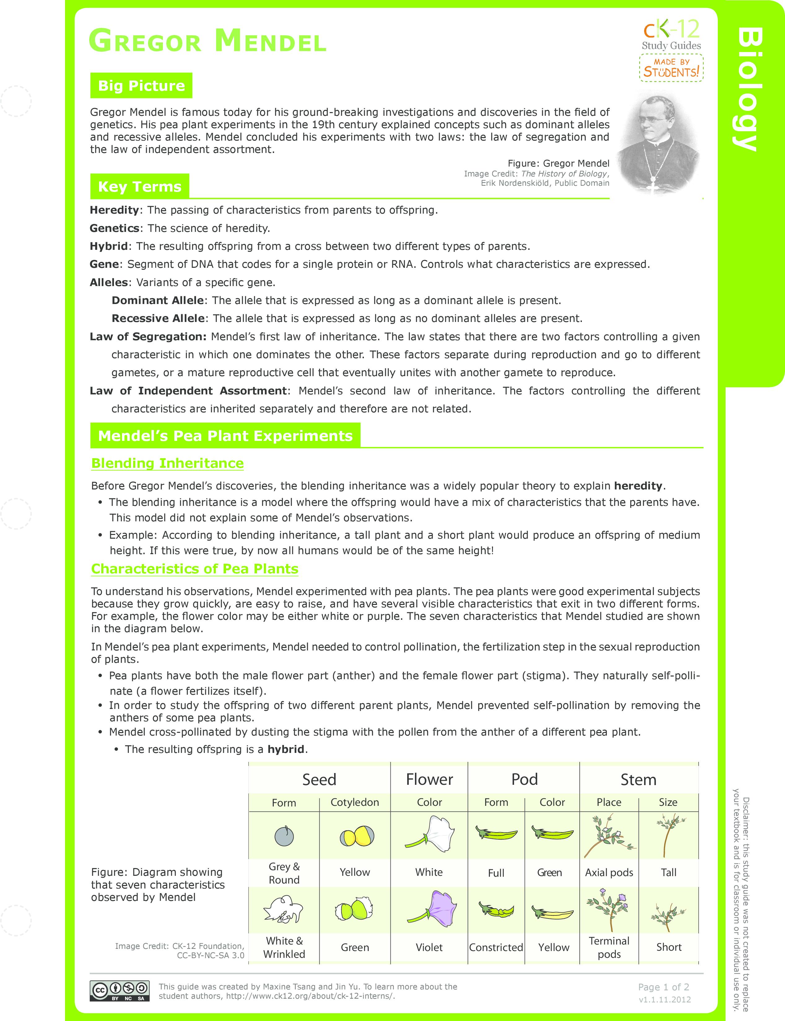 Mendels Laws – Mendel Worksheet