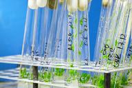 Controlling Plant Hormones