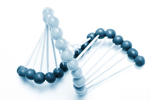 A simple model of DNA