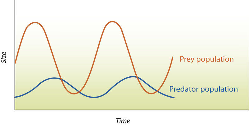 Predator-Prey Population Dynamics