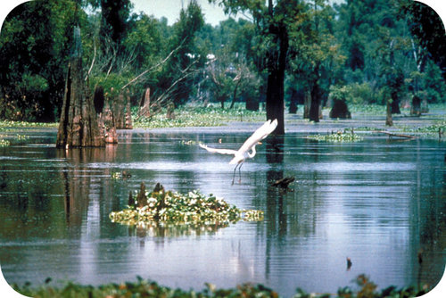 Wetlands and other environments depend on clean water to survive