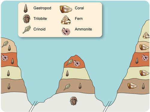 Relative dating with fossils