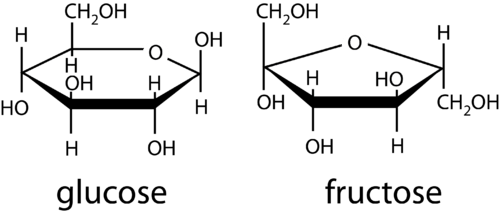 Cyclic form of monosaccharides glucose and fructose
