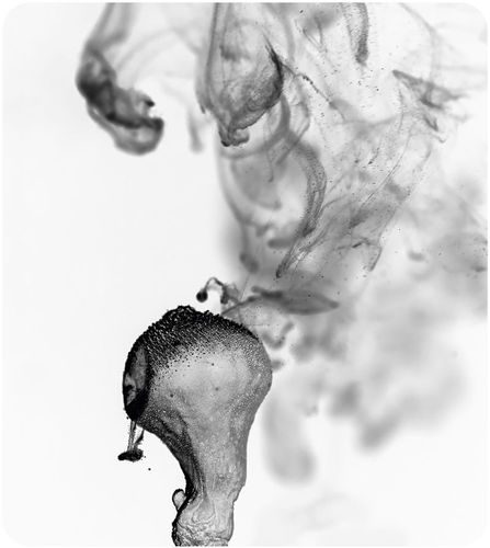 Puffballs release spores when disturbed.