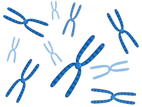 7.9 Human Chromosomes and Genes