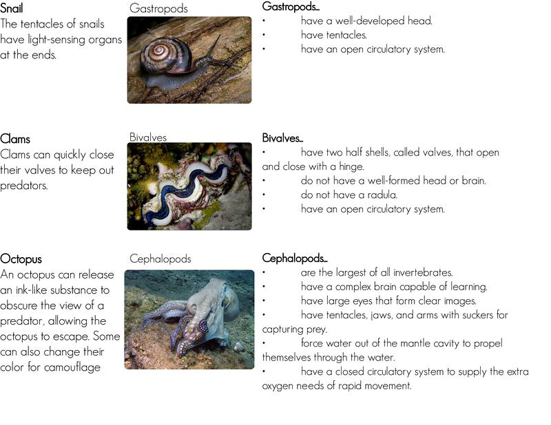 Classes of mollusks: gastropods, bivalves, and cephalopods