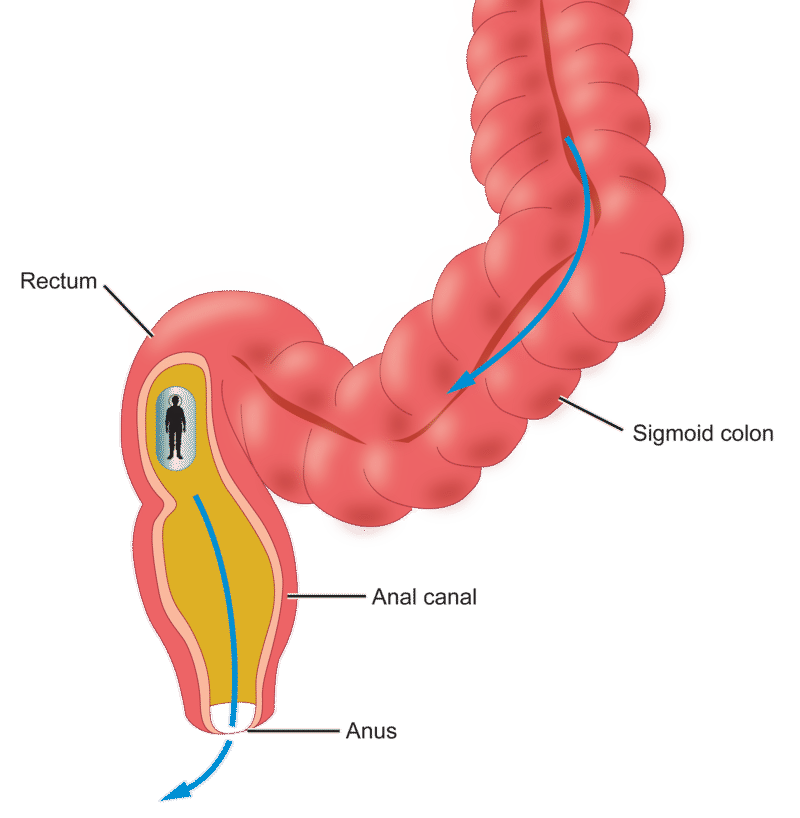 a journey through the intestine | ck-12 foundation, Human Body