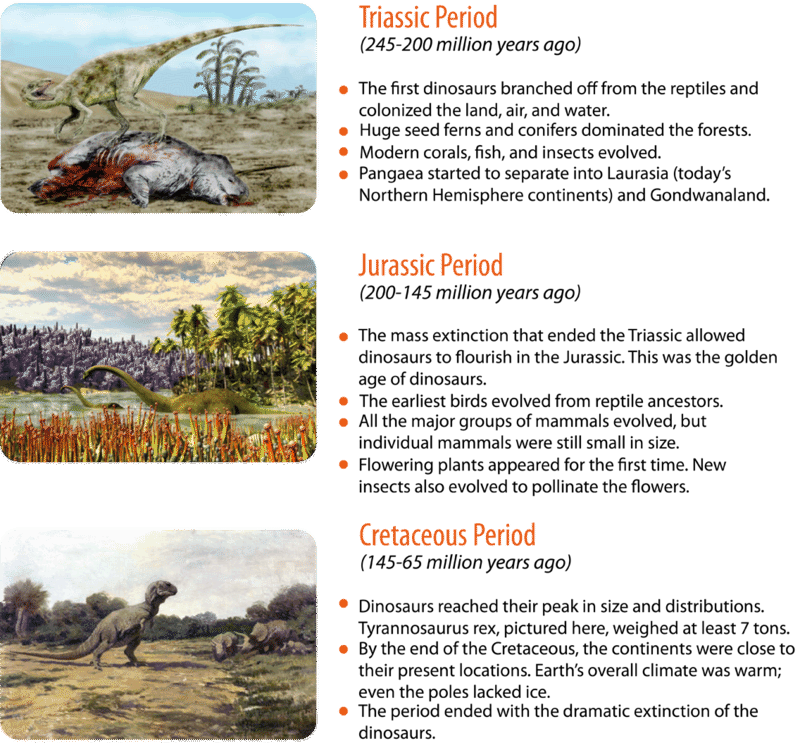 the mesozoic era Bobainsworthcom - the mesozoic era an illustrated geological time line for the mesozoic era, which includes the triassic, jurassic and cretaceous periods.