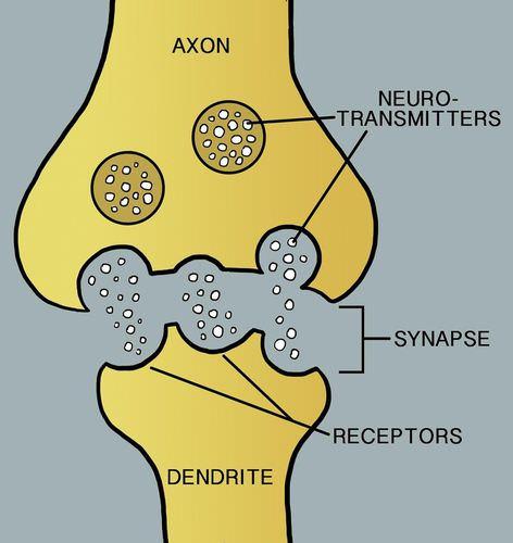 nerve cells and nerve impulses ck 12 foundation blank neurotransmitter diagram blank carroll diagram