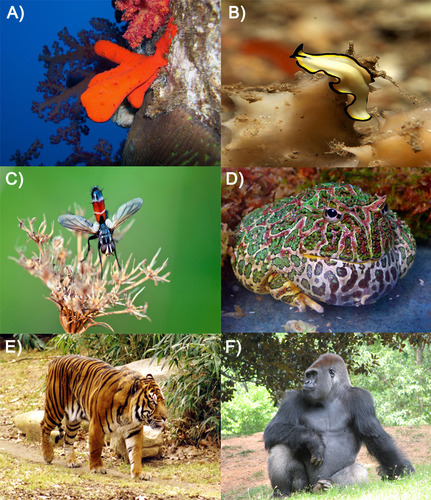 Picture showing the diversity of animals