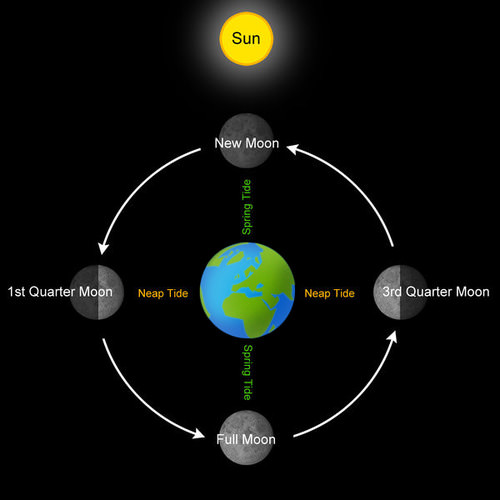 The Sun and Moon both affect Earth's tides