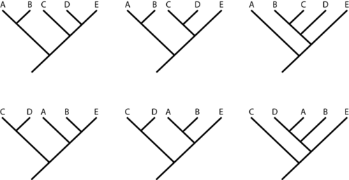 the same set of data on five related species may generate over 100 possible cladograms just six are shown here in cladogram 1 top left d and e share a