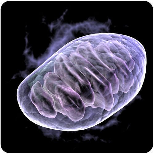 Ribosomes and Mitochondria