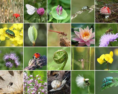 Protecting Biodiversity - Advanced