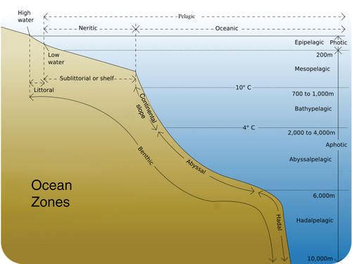 Aquatic Biomes – Ocean Zones Worksheet