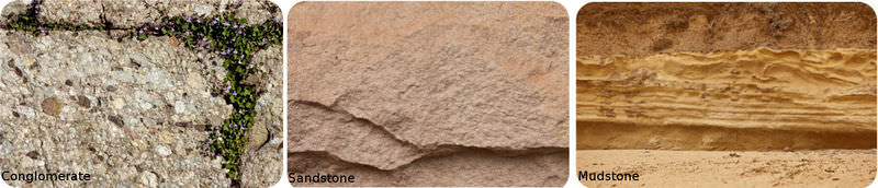Conglomerate, sandstone, and mudstone have different sediment sizes