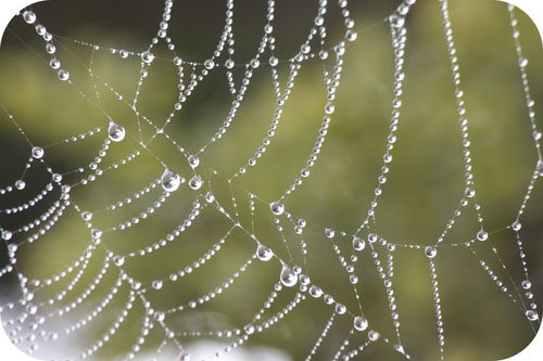 Droplets of dew clinging to a spider web
