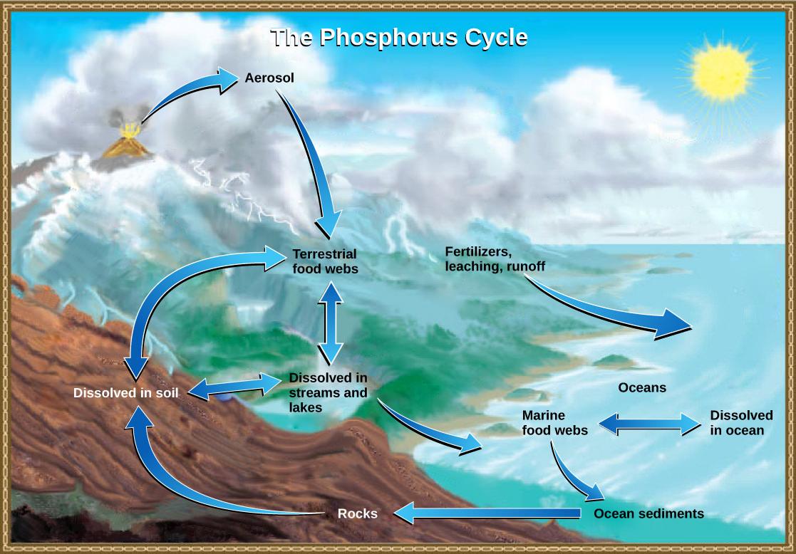 3.2 biogeochemical cycles – environmental biology