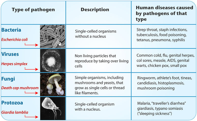 Barriers to pathogens ck 12 foundation - Type of foundation concept ...