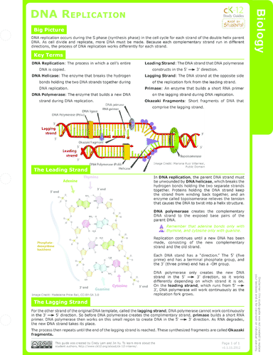 a study of the dna structure Download and read structure of dna study guide structure of dna study guide some people may be laughing when looking at you reading in your spare time.