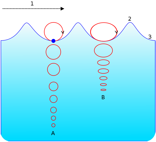 the circles show the motion of a water molecule in a wind wave  wave energy  is greatest at the surface and decreases with depth