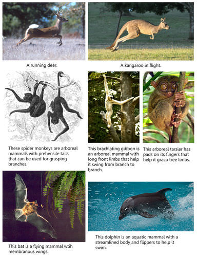 Various modes of mammalian locomotion