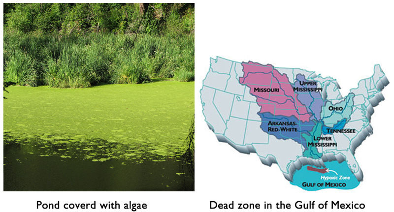Pond covered with algae, and a dead zone in the Gulf of Mexico due to too much nitrogen