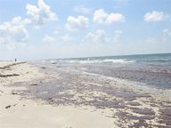 Oil on beaches after the Gulf of Mexico oil spill