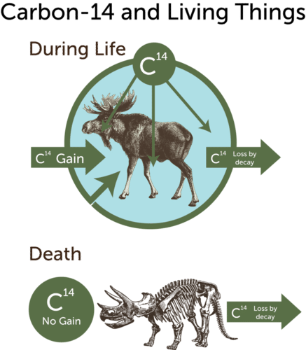 Half life and carbon dating