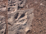 The preserved trace of a dinosaur footprint, originally in mud