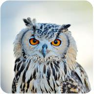 Bird Classification