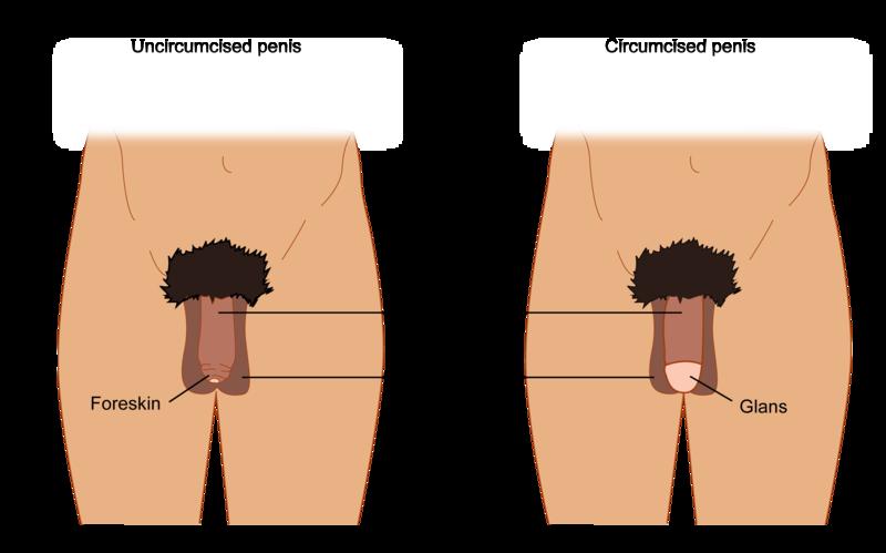 Jewish Men Penis Size 60