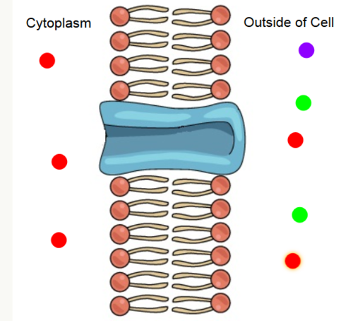 Membrane Proteins: Specificty