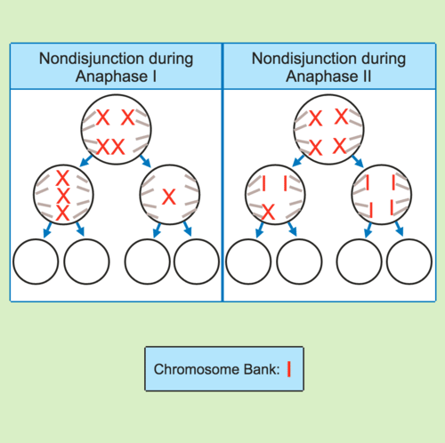 Genetic Disorders: Nondisjunction